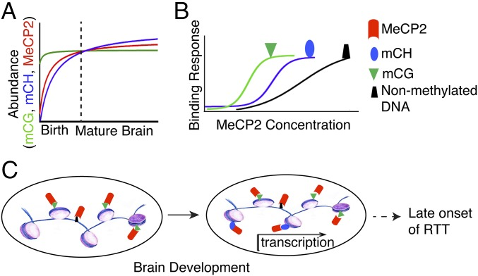 Reward circuitry dysfunction in psychiatric and neurodevelopmental disorders and genetic syndromes: animal models and clinical findings
